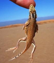Namibia Living Desert (12)