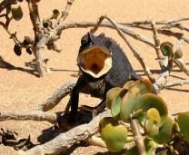 Namibia Living Desert (3)