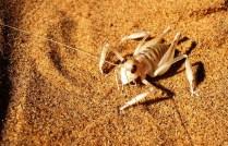 Namibia Living Desert (4)