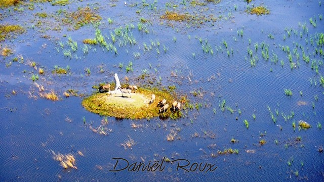 Okavango Delta (188)