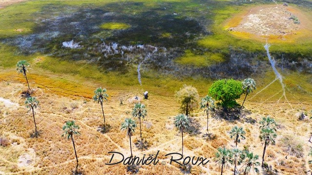 Okavango Delta (240)