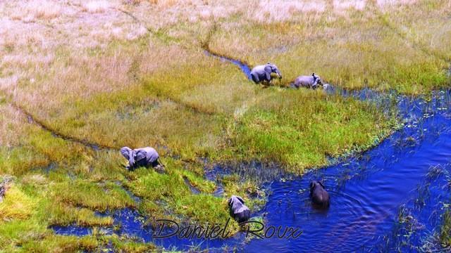 Okavango Delta (354)