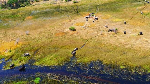 Okavango Delta (358)