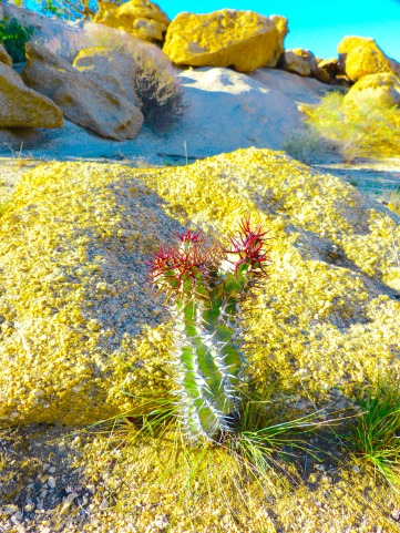Desert Plant Namibian