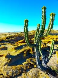 Desert Plants Scene.