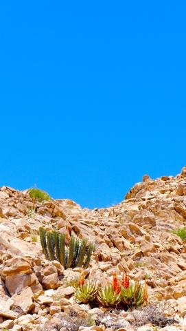 Desert Plants1