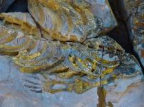 Fossils, Keetmanshoop