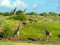 Opuwo, Kaokoland , Namibia