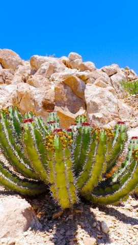 Plants Namibia Desert