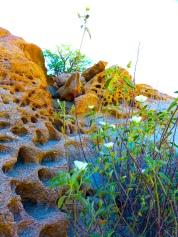 Plants of the Desert