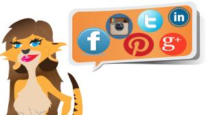Follow social