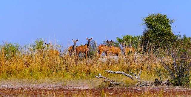 Okavango Panhandle (758)