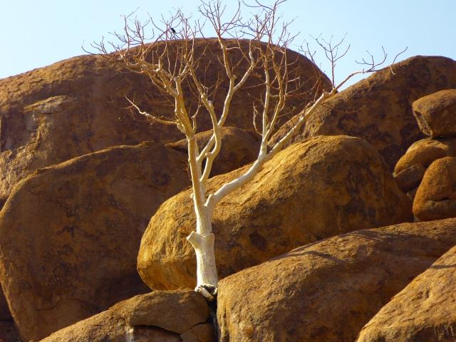 Twyfelfontein (660)